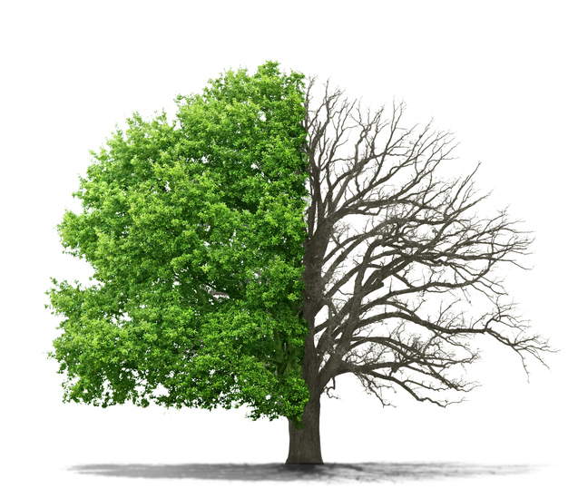 درخت دانش در کتاب خوانی
