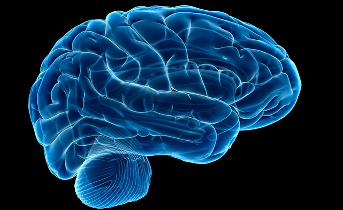مغز چیست؟