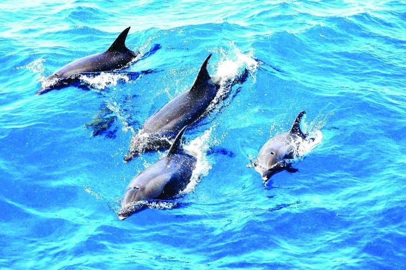 تفکر دلفینی